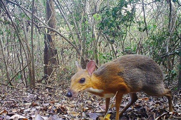 کشف جانور عجیبی که تصور می شد منقرض شده