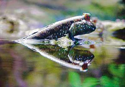 ده جانور دیدنی در ایران