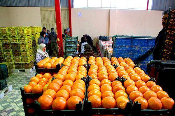 خریداری هزار تن میوه شب عید برای بازار سمنان