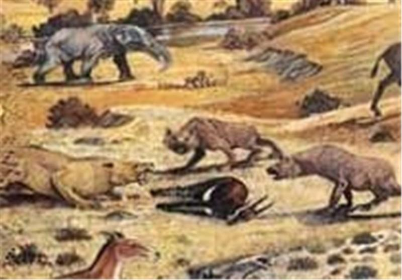 موزه فسیل در خراسان جنوبی راه اندازی می شود