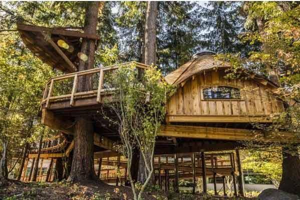 خانه های درختی برای کارکنان مایکروسافت