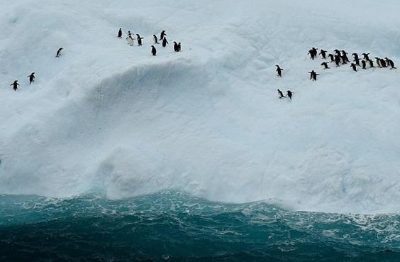 ایران ادعای مالکیت بخشی از قطب جنوب را دارد
