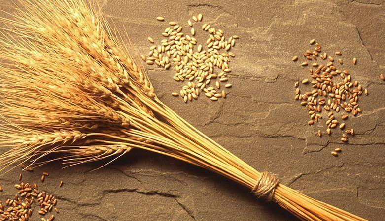 خبرنگاران 2 هزار و 600 تن بذر گواهی شده در چهارمحال و بختیاری تولید شد