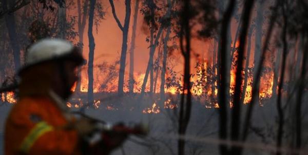 دو سال حبس برای عامل آتشسوزی نیزارهای تالاب زریبار