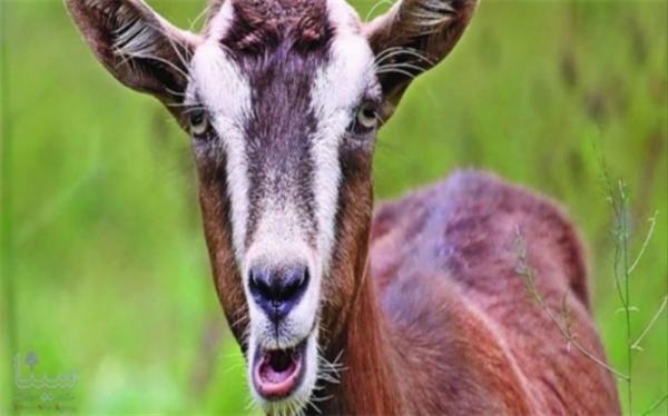 حیوانات هم دارای لهجه هستند؟