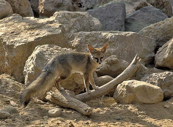 جانورهای نادر ایرانی